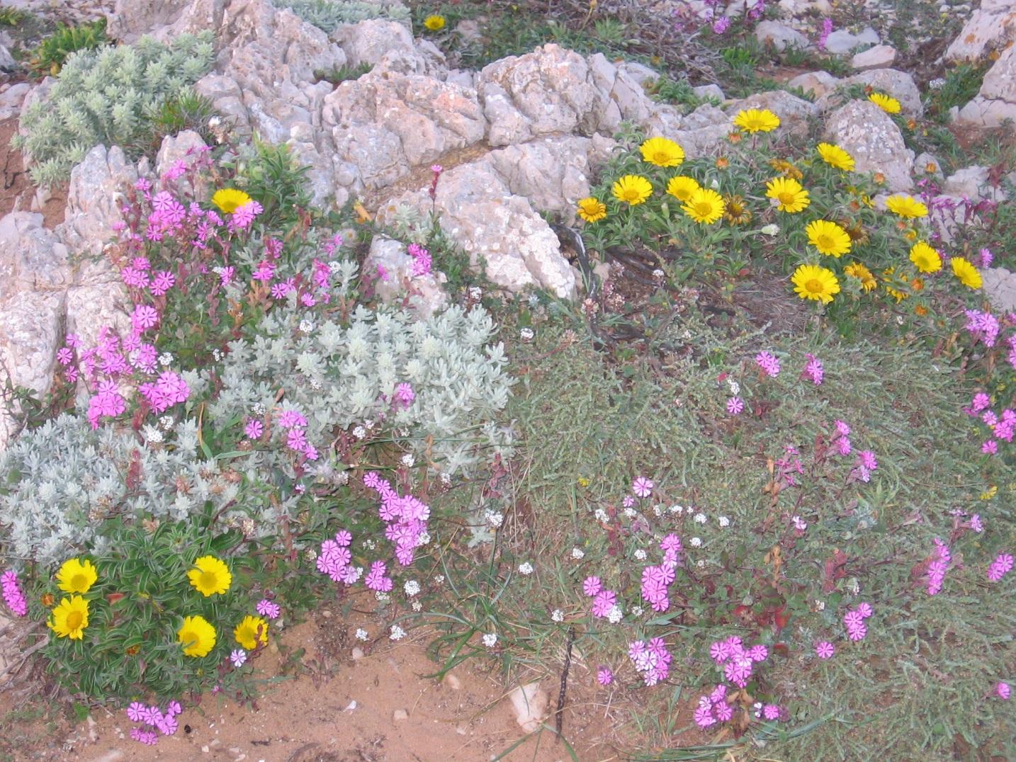 Proyectos con afecciones a la Red Natura 2000 - PERSEA Soluciones Ambientales S.L.