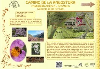 Diseño de los carteles de Flora y Fauna