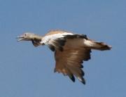 Estudios de avifauna - PERSEA Soluciones Ambientales