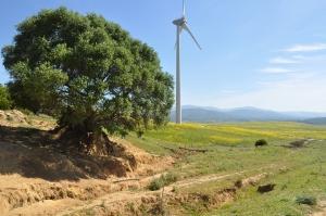 Parques eólicos: métodos de evaluación del medio terrestre para aves y quirópteros.