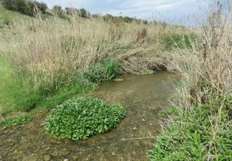 Estudio de flora y fauna del Arroyo de las Fuentes