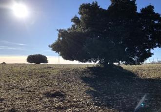 Evaluación de impacto ambiental de parques solares fotovoltaicos en Castilla-La Mancha .