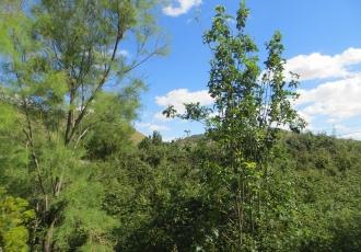 EIA simplificada de un Punto limpio en el municipio de Anchuelo.